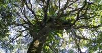 Gondwana Rainforest Walk