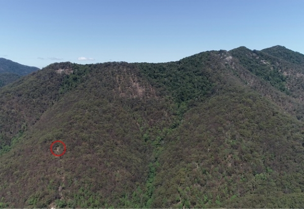Mowburra Peak Forest